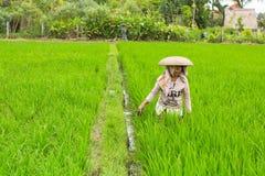 Coltivatore che lavora al giacimento del riso L'agricoltura fornisce l'occupazione alla popolazione più di di 38% in Indonesia Immagini Stock Libere da Diritti
