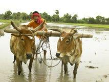Coltivatore che lavora nel suo campo di risaia fotografia stock libera da diritti
