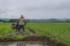 Coltivatore che lavora piantando riso nel campo di risaia Immagine Stock