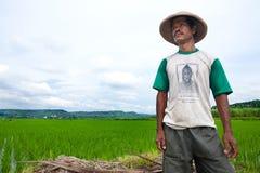 Coltivatore che osserva fuori al suo campo di risaia, Indonesia Immagini Stock