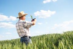 Coltivatore che si leva in piedi in un campo di frumento Immagine Stock