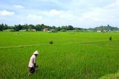 Coltivatore che tende il suo campo di risaia, Indonesia Immagini Stock Libere da Diritti