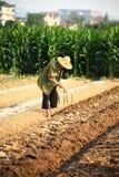 Coltivatore cinese anziano Immagini Stock