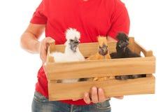 Coltivatore con i polli Immagini Stock