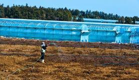 Coltivatore coreano che lavora al campo della serra Immagini Stock
