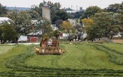 Coltivatore dei Amish Immagini Stock