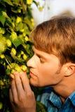 Coltivatore del luppolo che controlla il suo raccolto Fotografia Stock