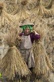 Coltivatore del riso di Hani in Cina fotografia stock libera da diritti