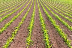 Coltivatore dell'alimento di agricoltura dell'Oregon del cereale di campo dell'agricoltore Immagine Stock Libera da Diritti