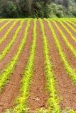 Coltivatore dell'alimento di agricoltura dell'Oregon del cereale di campo dell'agricoltore Immagine Stock