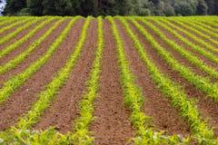 Coltivatore dell'alimento di agricoltura dell'Oregon del cereale di campo dell'agricoltore Fotografia Stock Libera da Diritti