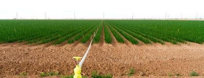 Coltivatore dell'alimento di agricoltura di California delle cipolle verdi del campo dell'agricoltore Immagini Stock Libere da Diritti