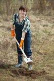 Coltivatore femminile che pianta piantagione di arbusti Fotografie Stock