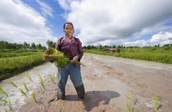 Coltivatore femminile del riso in Tailandia Immagini Stock Libere da Diritti