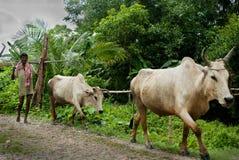 Coltivatore indiano Fotografia Stock