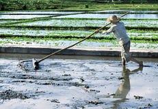 Coltivatore indonesiano immagine stock libera da diritti