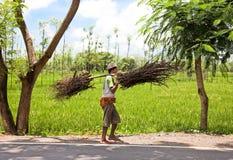Coltivatore indonesiano che trasporta le filiali asciutte Fotografia Stock Libera da Diritti