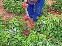 Coltivatore nel campo Immagini Stock