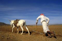 Coltivatore sul lavoro nel Yemen Fotografia Stock