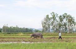 Coltivatore tailandese Immagine Stock