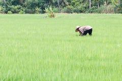 Coltivatore tailandese Fotografie Stock