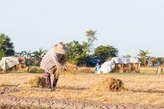 Coltivatore tailandese Immagine Stock Libera da Diritti
