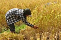 Coltivatore tailandese dell'uomo Immagini Stock Libere da Diritti