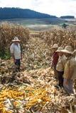 coltivatori Immagini Stock Libere da Diritti