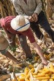 coltivatori Immagini Stock