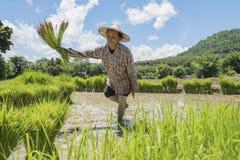 coltivatori Immagine Stock Libera da Diritti