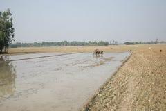 Coltivatori che arano campo agricolo Fotografia Stock Libera da Diritti