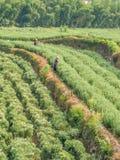 Coltivatori cinesi che lavorano nel campo immagine stock