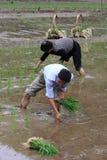 Coltivatori cinesi nella piantatura Fotografia Stock Libera da Diritti