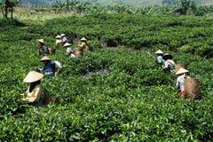 Coltivatori indonesiani Fotografia Stock