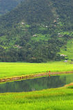 Coltivatori nella riflessione dell'acqua, lago di fewa, Nepal Fotografia Stock