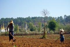 Coltivatori sul campo Immagini Stock Libere da Diritti