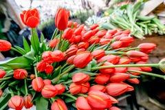 Coltivazione dei tulipani dei fiori in serra industriale Immagini Stock Libere da Diritti