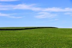 Coltivazione del cereale e della soia nel sud del Brasile Bei campi verdi che crescono parallelamente con il cielo blu come fondo Fotografia Stock
