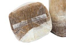 Coltivazione del fungo con segatura nel sacchetto di plastica Fotografia Stock
