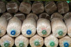 Coltivazione del fungo nell'azienda agricola domestica del fungo Fotografia Stock