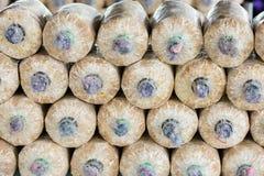 Coltivazione del fungo in suolo e segatura Immagini Stock Libere da Diritti