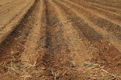 Coltivazione del suolo della canna da zucchero Immagine Stock