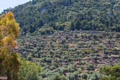 Coltivazione del terrazzo sull'isola di Mallorca, Spagna Fotografia Stock Libera da Diritti