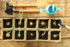 Coltivazione delle piante con gli strumenti di giardino Fotografie Stock