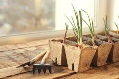 Coltivazione delle piante con gli strumenti di giardino Fotografia Stock Libera da Diritti