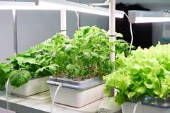 Coltivazione delle piante con i metodi moderni Fotografie Stock Libere da Diritti