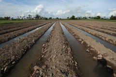 Coltivazione delle piante del suolo della terra Fotografie Stock Libere da Diritti