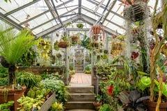 Coltivazione delle piante della serra Immagine Stock