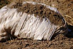 Coltivazione delle piante di plastica della tela cerata Fotografie Stock