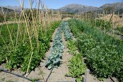 Coltivazione delle verdure nel giardino Fotografia Stock